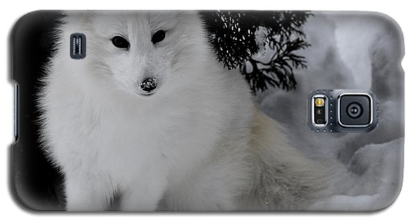 Artic Fox Galaxy S5 Case