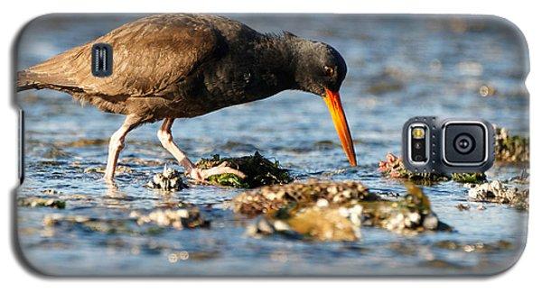 Black Oystercatcher Pacific Coast Galaxy S5 Case