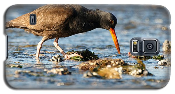Black Oystercatcher Pacific Coast Galaxy S5 Case