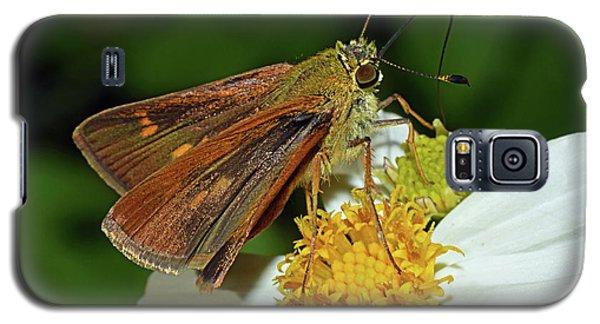 Skipper Butterfly Galaxy S5 Case
