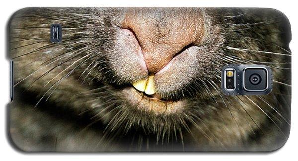 Wombat At Night Galaxy S5 Case