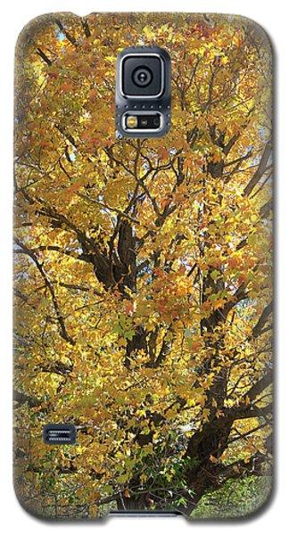 2018 Edna's Tree Up Close Galaxy S5 Case