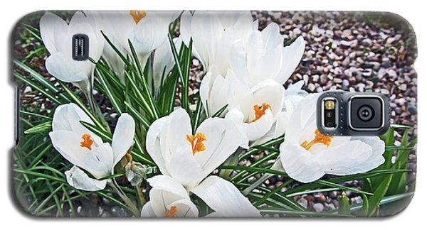 25/03/18  Ramsbottom Chocolate Festival. White Crocuses. Galaxy S5 Case