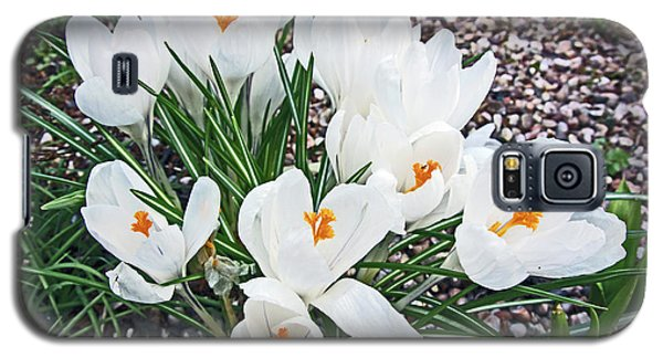 25/03/18  Ramsbottom Chocolate Festival. White Crocuses. Galaxy S5 Case