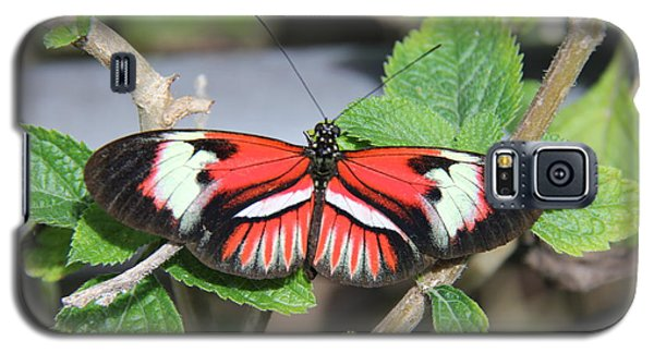Butterfly Galaxy S5 Case