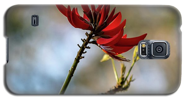 Coral Tree Flowers Galaxy S5 Case