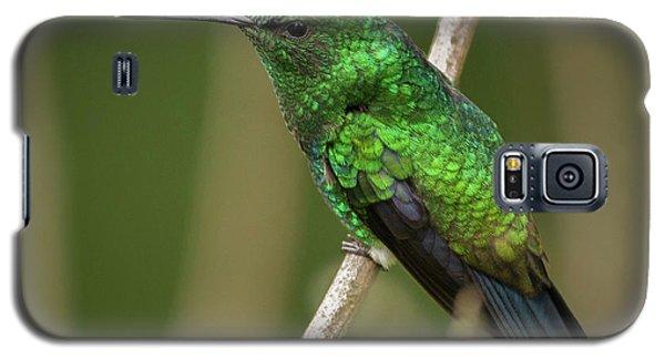 Western Emerald Jardin Botanico Del Quindio Calarca Colombia Galaxy S5 Case