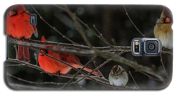 3cardinals And A Sparrow Galaxy S5 Case