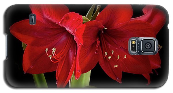 Amaryllis Merlot' Galaxy S5 Case