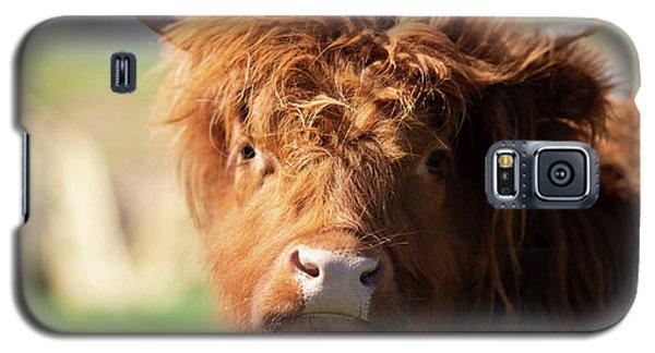 Highland Cow On The Farm Galaxy S5 Case