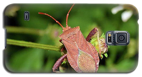 Leaf Footed Bug Galaxy S5 Case