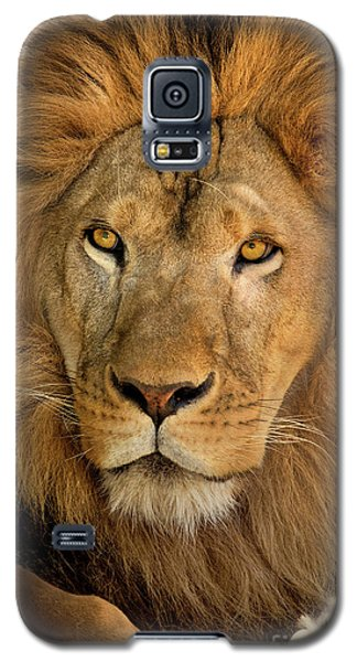 656250006 African Lion Panthera Leo Wildlife Rescue Galaxy S5 Case