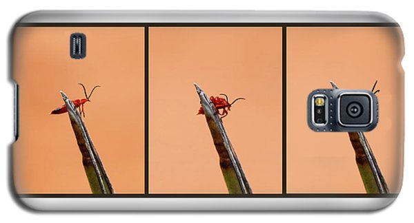 Agave Americana Galaxy S5 Cases | Fine Art America