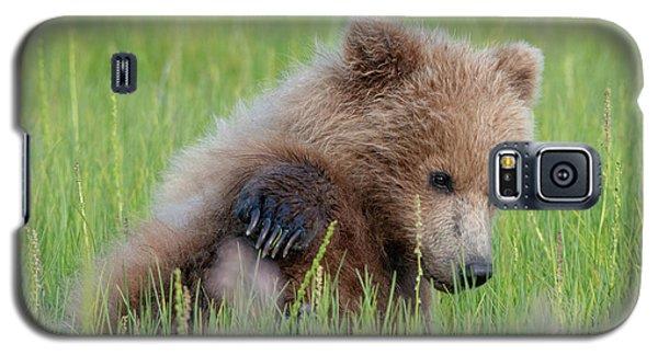A Coy Cub Galaxy S5 Case