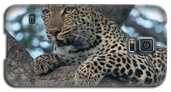 A Focused Leopard Galaxy S5 Case