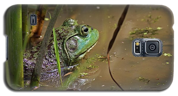 A Frog Waits Galaxy S5 Case