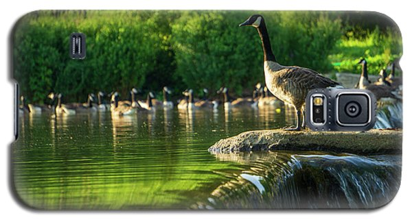 A Gaggle Of Geese Galaxy S5 Case
