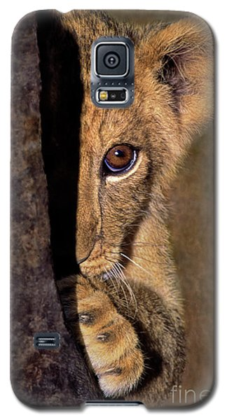 A Lion Cub Plays Hide And Seek Wildlife Rescue Galaxy S5 Case