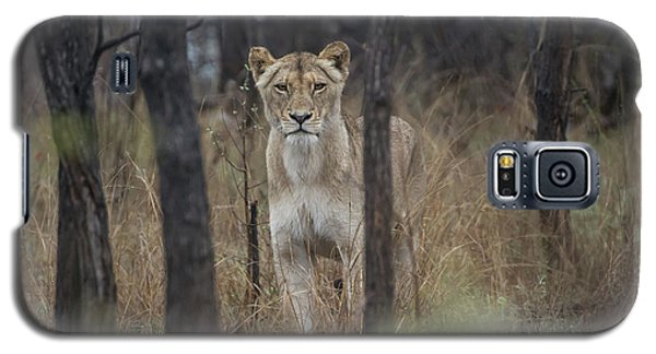 A Lioness In The Trees Galaxy S5 Case