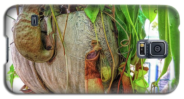 A Pitcher Plant On Our Terrace In Thailand Galaxy S5 Case