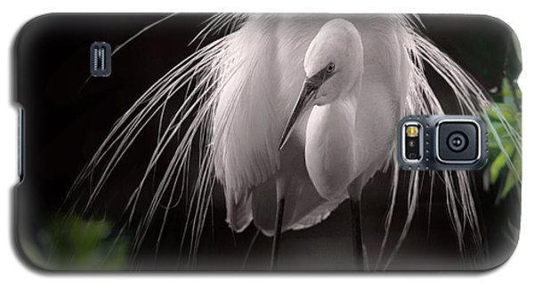 A Touch Of Class - Great Egret With Plumage Galaxy S5 Case