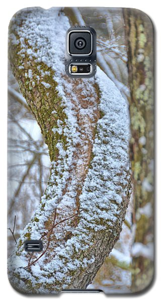 A Tree's Crook Galaxy S5 Case