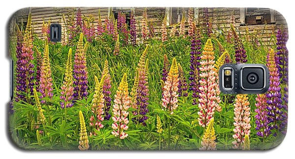 Abandoned Maine Farm Lupines Galaxy S5 Case
