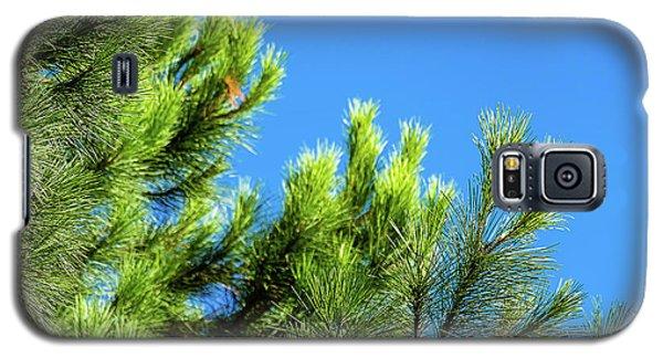 Adriatic Pine Against Blue Sky  Galaxy S5 Case
