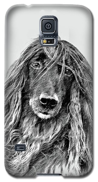Afghan Hound 3 Galaxy S5 Case