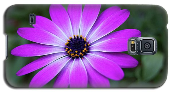 African Daisy Galaxy S5 Case