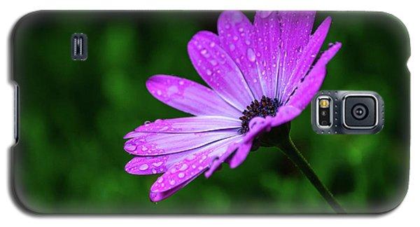 African Daisy II Galaxy S5 Case