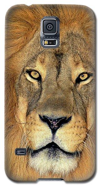 African Lion Portrait Wildlife Rescue Galaxy S5 Case