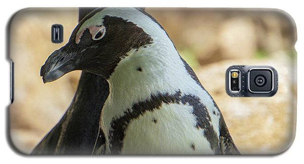 African Penguins Posing Galaxy S5 Case