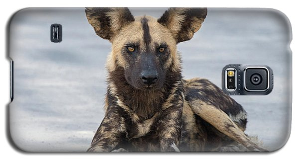 African Wild Dog Resting On A Road Galaxy S5 Case