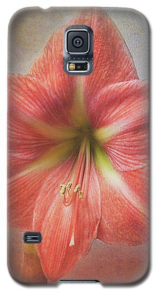 Amaryllis 'terra Cotta Star' Galaxy S5 Case