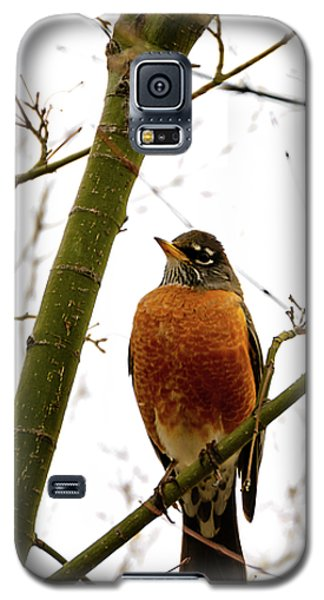 American Robin Perching In A Wintertime Tree Galaxy S5 Case