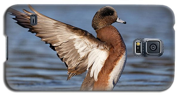 American Wigeon Delight Galaxy S5 Case