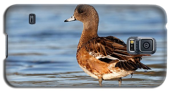 American Wigeon Standing Alert Galaxy S5 Case