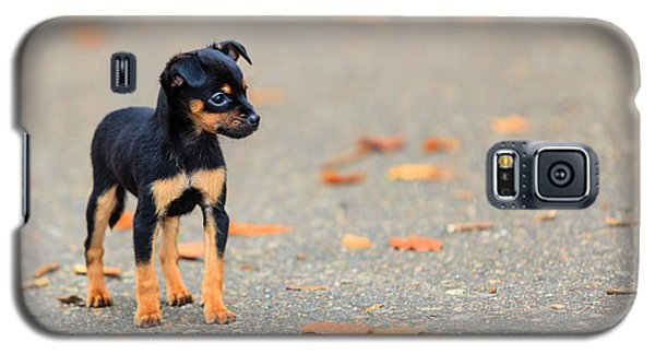 Cold Galaxy S5 Case - Animals Homeless. Little Dog Cute Puppy by Voyagerix