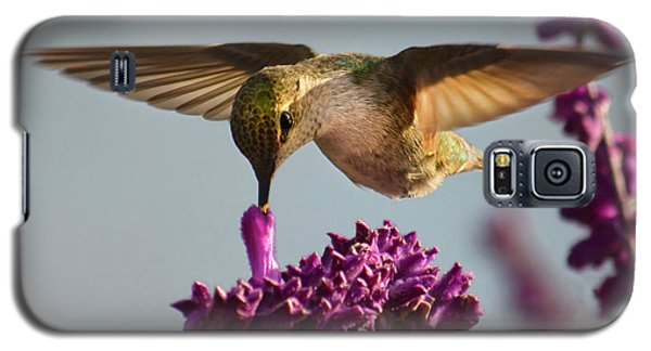 Anna's Hummingbird Sipping Nectar From Salvia Flower Galaxy S5 Case
