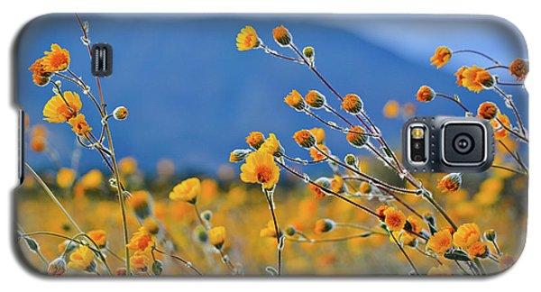 Anza Borrego Wild Desert Sunflowers Galaxy S5 Case