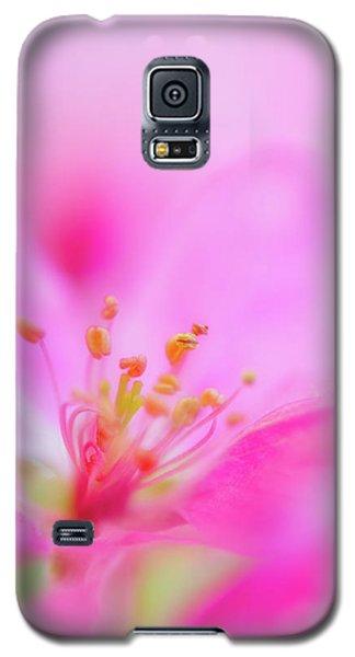 Apple Blossom 1 Galaxy S5 Case