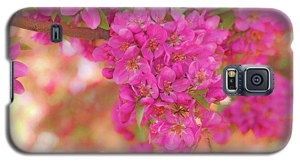 Apple Blossoms A Galaxy S5 Case
