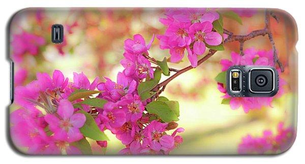 Apple Blossoms B Galaxy S5 Case