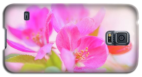Apple Blossoms Colorful Glow Galaxy S5 Case
