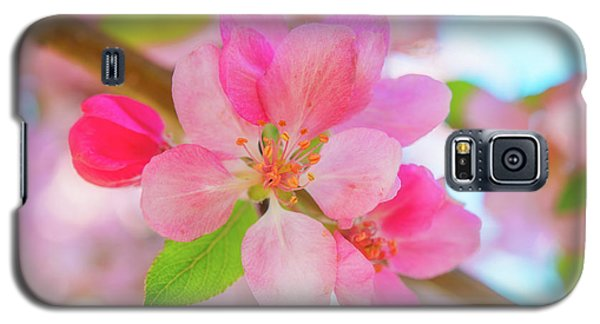 Apple Blossoms Red And Blue Galaxy S5 Case