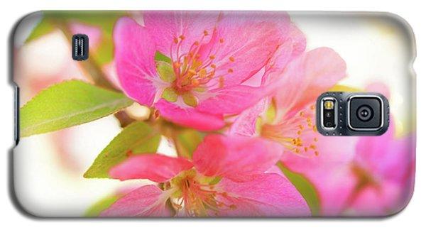 Apple Blossoms Warm Glow Galaxy S5 Case