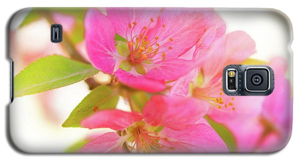 Apple Blossoms Warm Glow Galaxy S5 Case