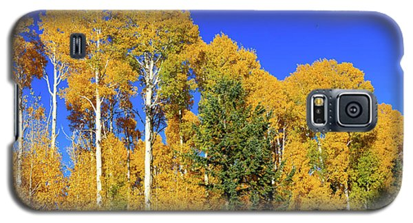 Arizona Aspens And Blowing Leaves Galaxy S5 Case