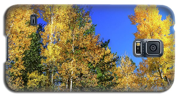 Arizona Aspens In Fall 1 Galaxy S5 Case